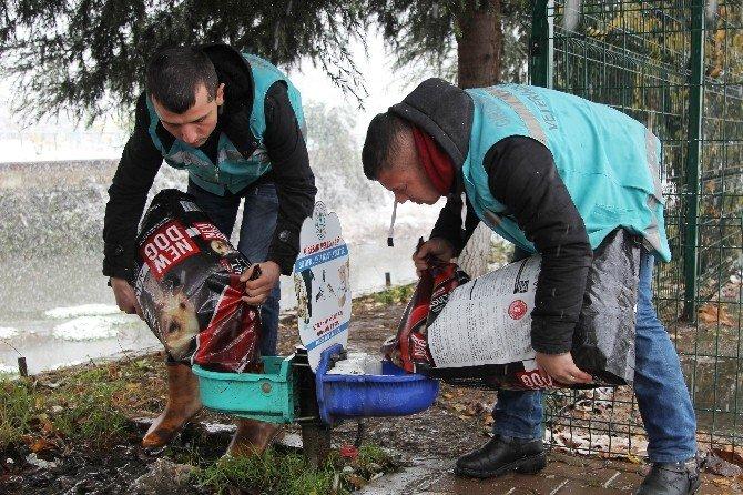 Kara Kıştan En Çok Sokak Hayvanları Etkileniyor