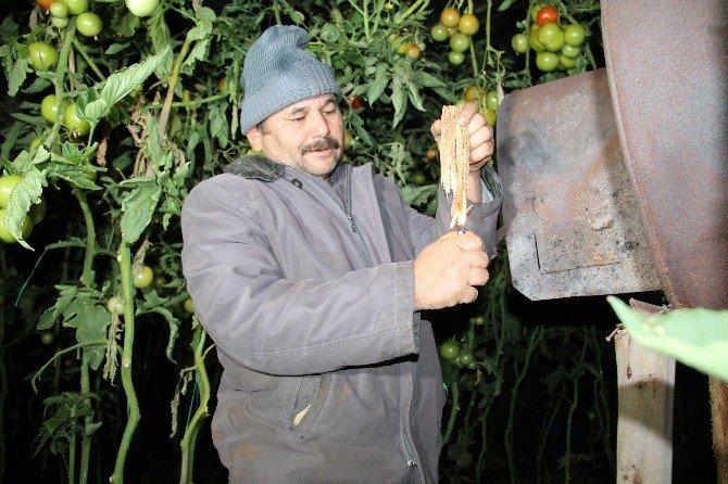 Millet Kutlama, Çiftçi Don Derdinde