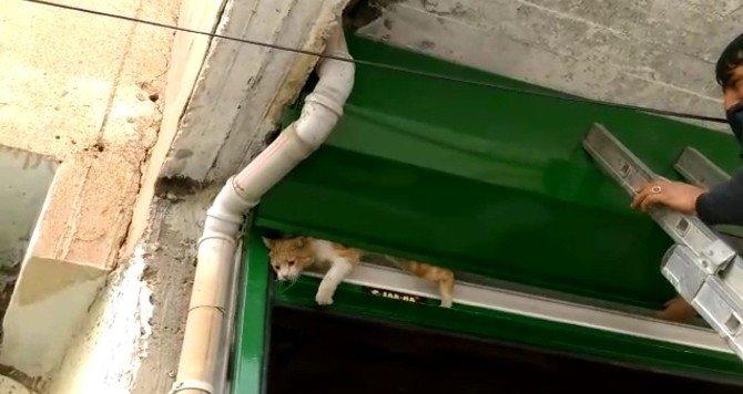 Kepenkte Sıkışan Kediyi Esnaf Kurtardı