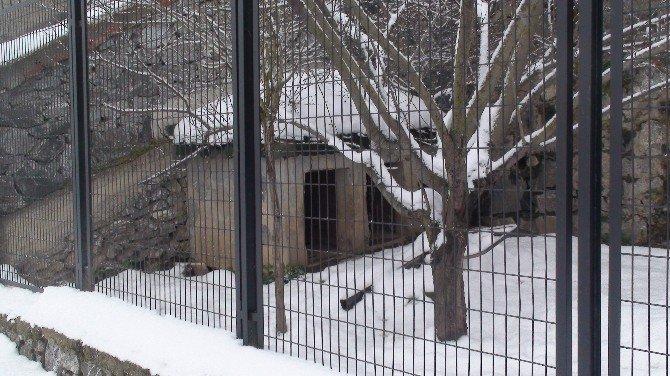 Cinayete Neden Olan Köpekleri De Alıp Gittiler