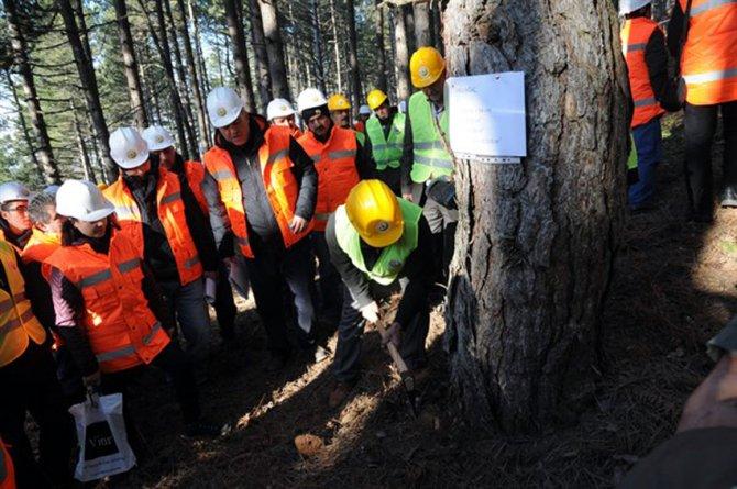 Ormanlarda, damga, üretim ve standardizasyon tatbikatları sürüyor