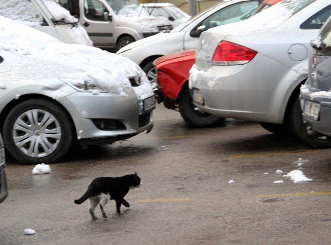 """""""Kediler için kaportaya vurmadan aracınızı çalıştırmayın"""""""