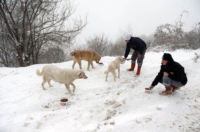 Bursa'da Yaban Hayvanları Aç Kalmadı