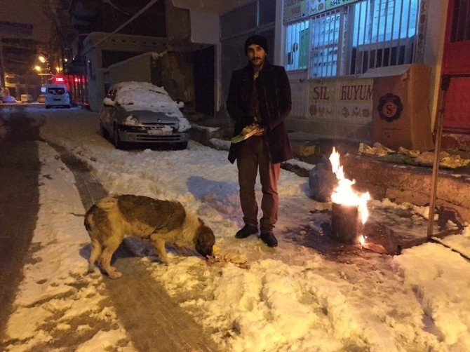 Dondurucu Soğukta Sokak Hayvanları Unutulmadı
