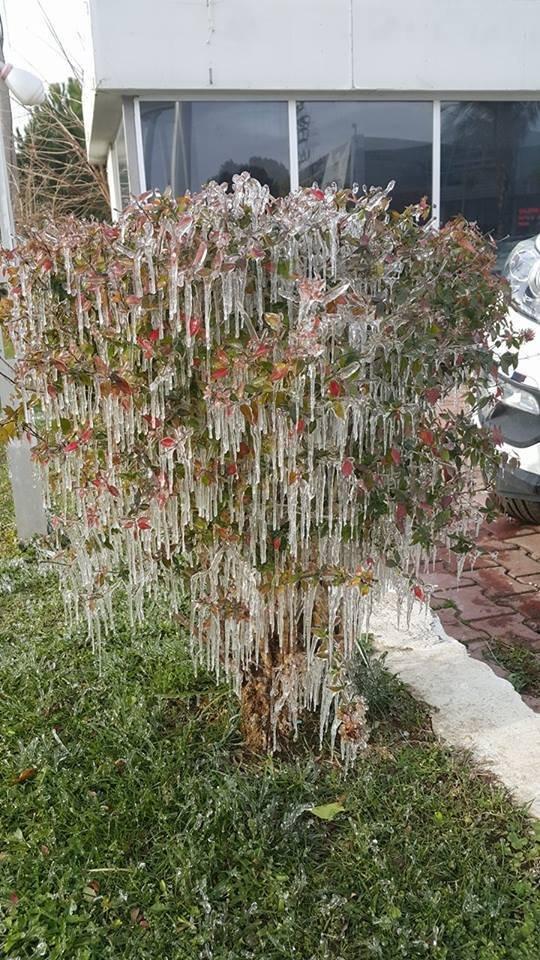 Antalya'da çiçekler de buz tuttu