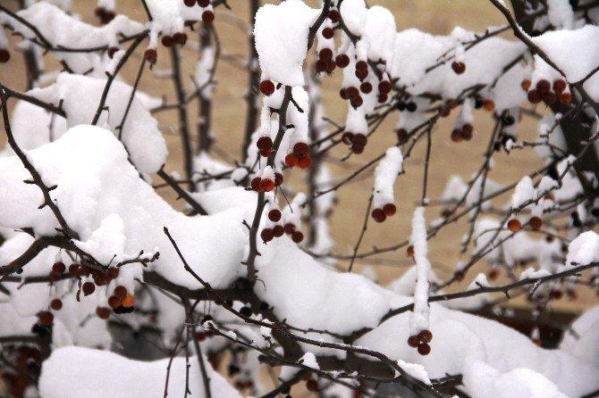 Iğdır'da Kar Esareti