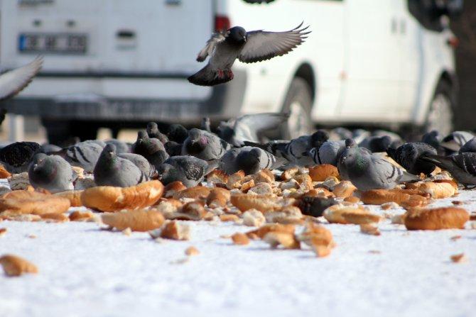 Soğuk havada kuşların ekmek kavgası