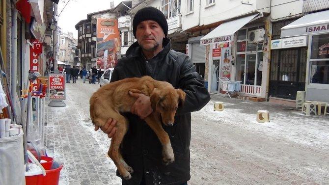 Donmak üzere olan köpeğe sahip çıktı
