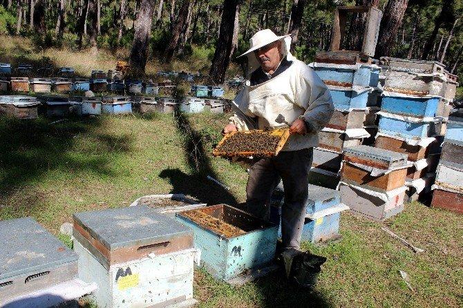 Arıcıların Yer Sıkıntısı
