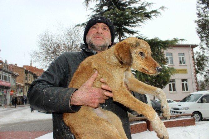 Donmak Üzere Olan Köpeği Esnaf Kurtardı