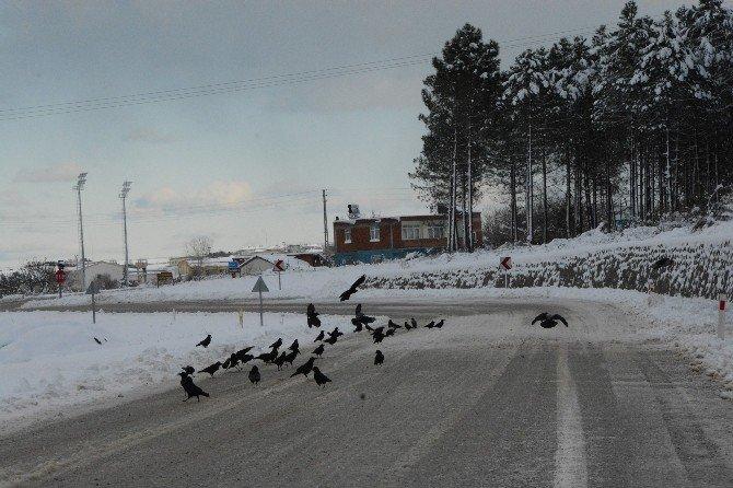 Vatandaşlar Karda Aç Kalan Kuşlar İçin Doğaya Yem Bıraktı