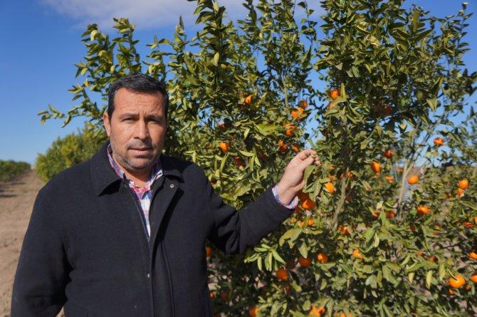 Adana çiftçisi, Rusya krizinin ardından 'don' şoku yaşıyor