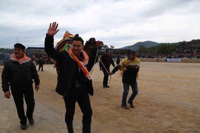 Bodrum'da Deve Güreşi Festivali