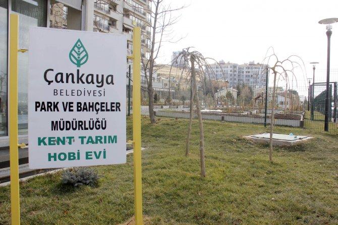 Çankayalılar, belediye desteğiyle sebze ve bitki yetiştiriyor