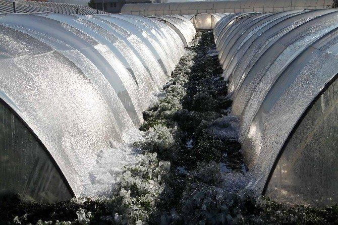 Çiftçiye Bir Darbede Soğuk Havadan