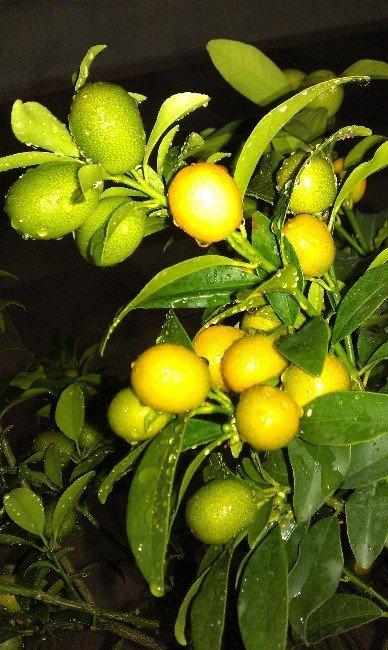 Sebze Ve Meyveler Hastalıklardan Koruyor
