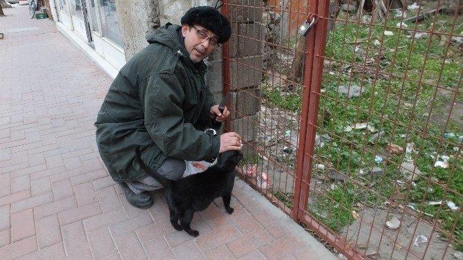Burhaniye'de Emekli Vatandaş Sokak Hayvanlarına Sahip Çıktı