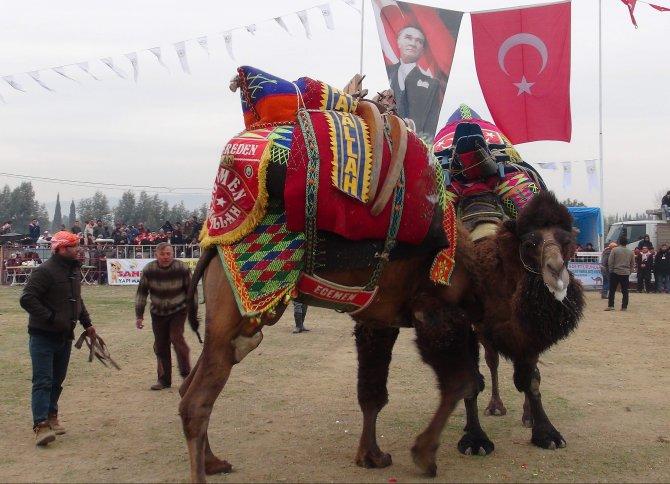 İncirliova deve güreşi kıran kırana geçti