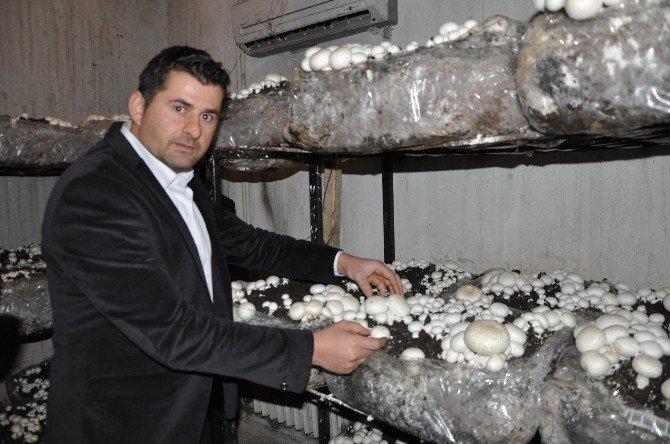 Ranzalarda Kültür Mantarı Yetiştirildi