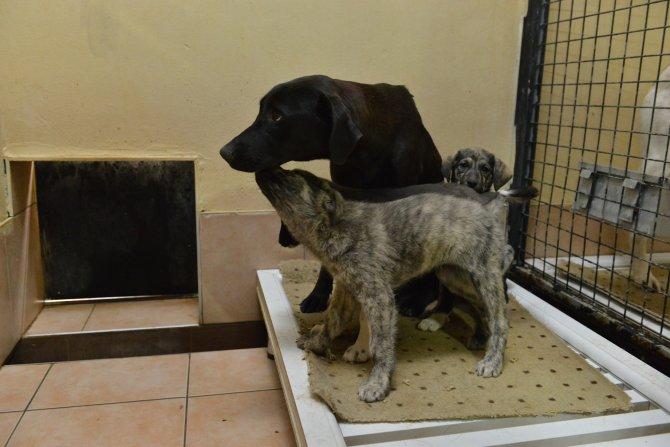 Kedi ve köpekler ısıtıcılı odada soğuktan korunuyor