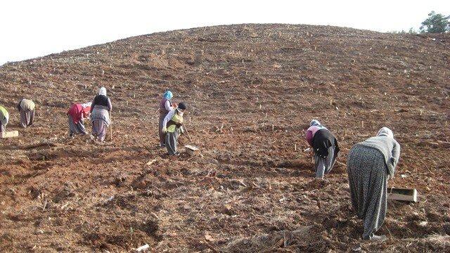 Pozantı'da Endüstriyel Ağaçlandırma Çalışmaları