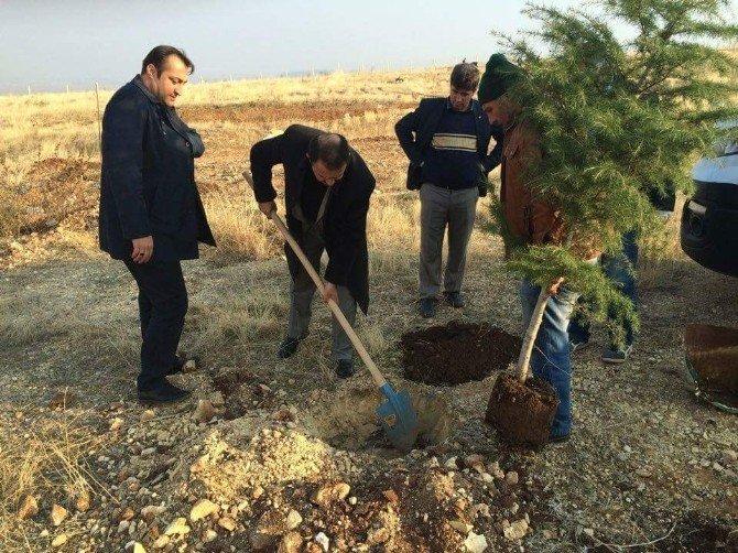 Adıyaman Belediyesi 60 Bin Fidanı Toprakla Buluşturdu