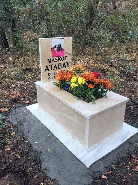 Ormanda Köpek Mezarı Yeni Tartışma Başlattı