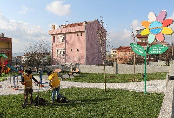 Büyükçekmece Ceviz Ağaçları İle Donatılıyor