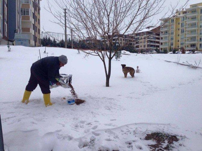 Edirne'de Sokak Hayvanlarına Yiyecek Bırakılıyor