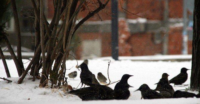 Yozgat'ta Vatandaş Kuşları Unutmadı