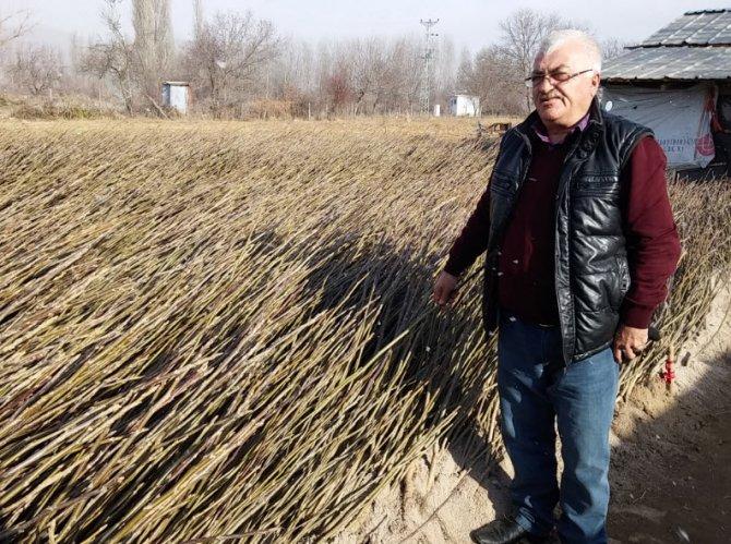 Kazakistanlı girişimci Simav'da ceviz fidanı üretiyor