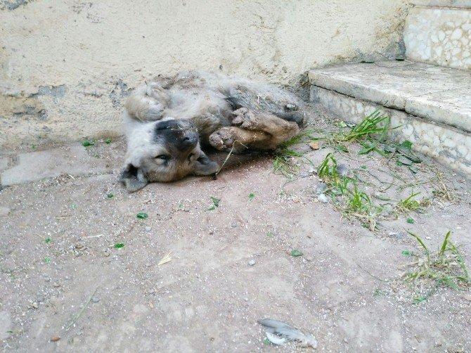 Yavru Köpek Donarak Öldü