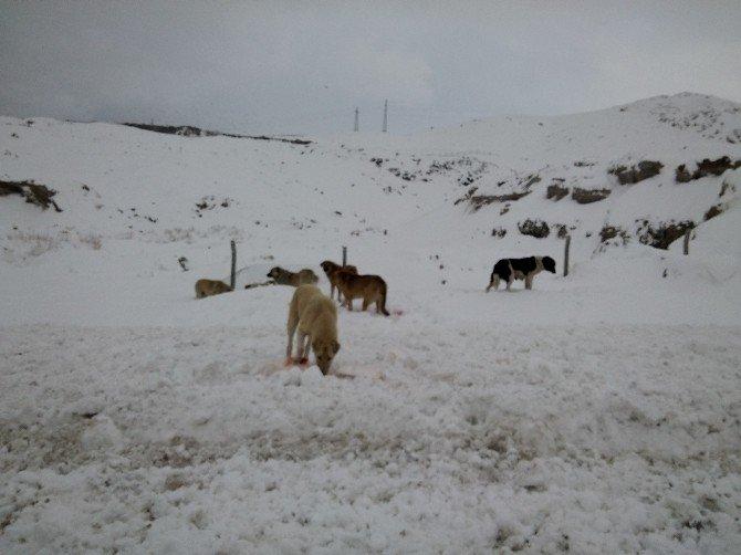 Van'da Sahipsiz Hayvanlar İçin Yem Bırakıldı