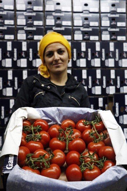 Sivri Biber, Patlıcan Ve Salatalığa Düşük Üretim Zammı Kapıda