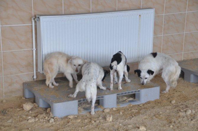 Edirne'de sokak hayvanları kaloriferli ortamda kalıyor