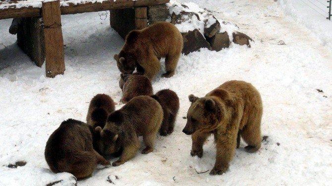 Hayvanat Bahçesindeki Hayvanların Kar Sevinci