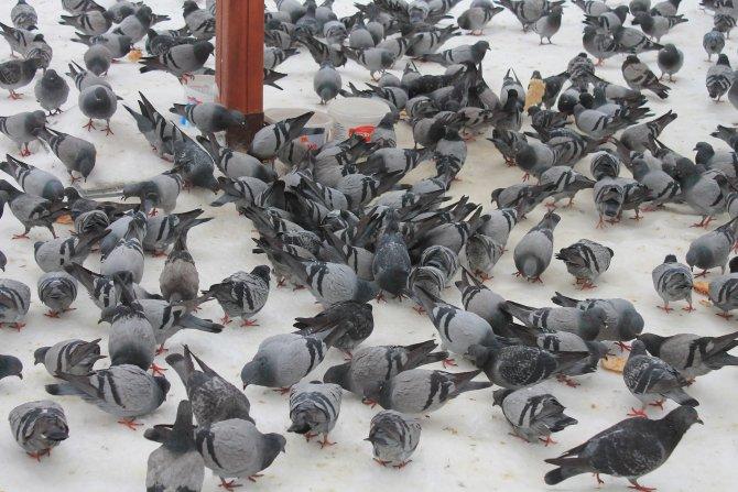 Sokak köpekleri ve kuşlara karda gıda takviyesi yapıldı