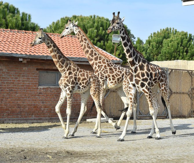 İzmir Doğal Yaşam Parkı'nda yeni ziyaretçi rekoru