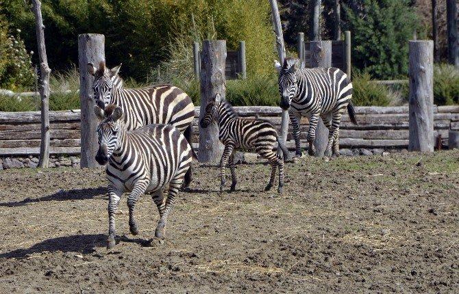 Doğal Yaşam Parkı 1 Milyon Ziyaretçi Sınırını Zorladı