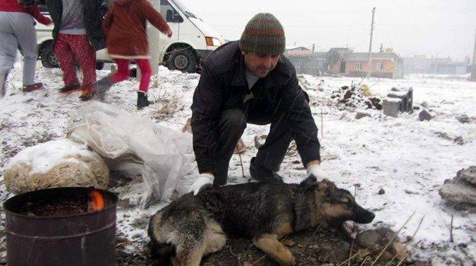 Belediye Yaralı Köpeğe Sahip Çıktı
