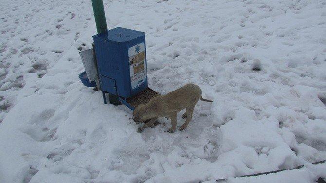 Kar Yağışı Sonrası Sokak Hayvanları Unutulmadı