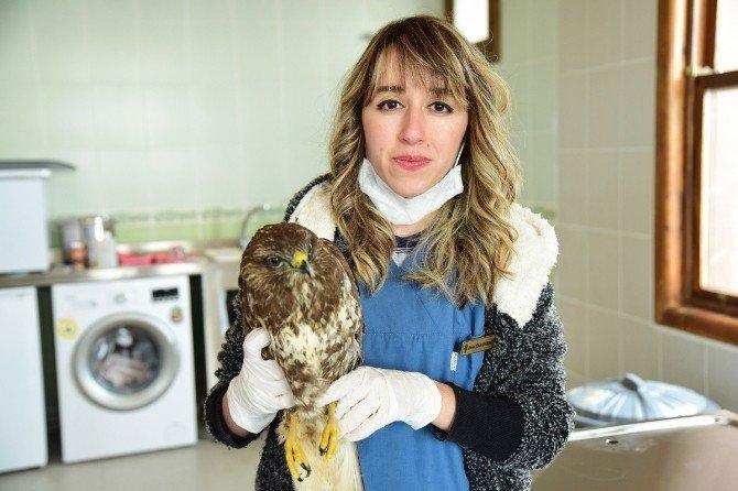 Kuş Cenneti'nde Hasta Kuşlara Özel Bakım