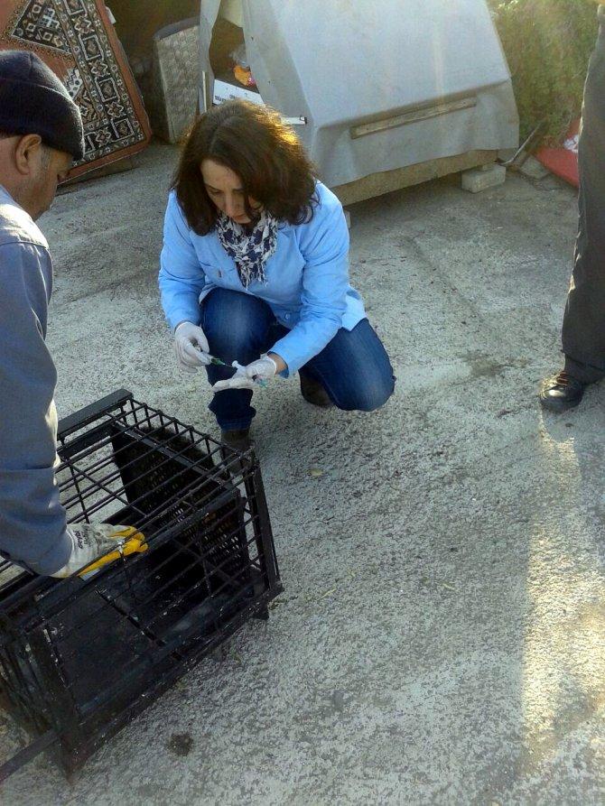 Mudanya'da gönüllü-belediye işbirliğiyle sokak kedilerine bakım