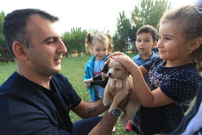 Binlerce Hayvan Osmangazi'de Sağlığına Kavuştu