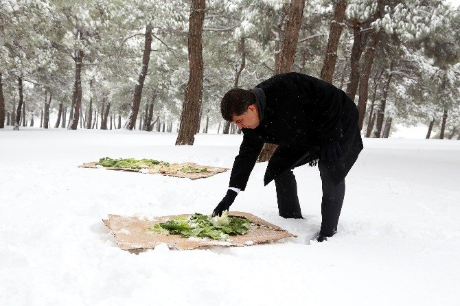 Başkan Fadıloğlu, Doğaya Yem Bıraktı