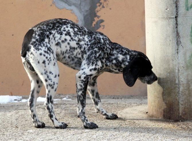 Soğuk kış günlerinde ihmal edilen sokak hayvanları bir bir ölüyor