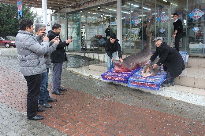 2016'nın İlk Köpek Balıkları Kanser Hastalarına Şifa Olacak