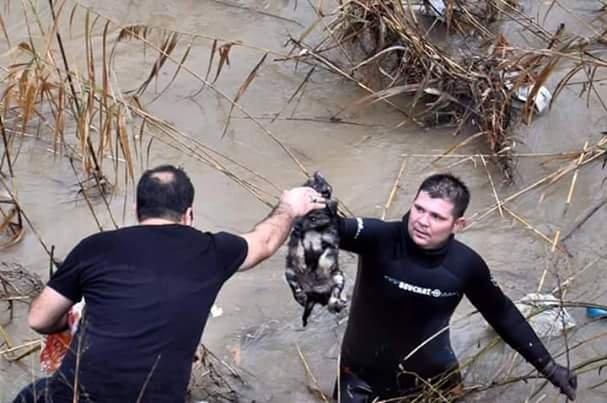 Çaya düşen yavru köpek dalgıçla kurtarıldı