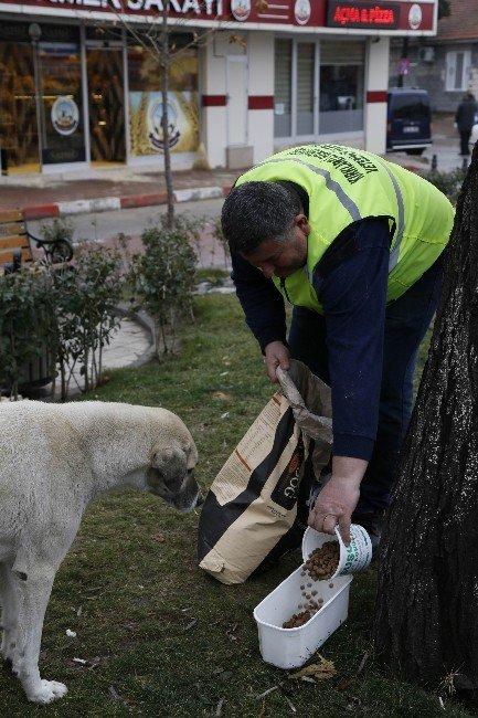 Kırklareli'nde Sokak Hayvanları Unutulmadı