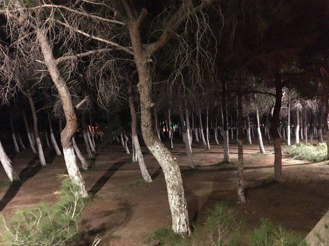 Didim Belediyesi Çamlık Alanını Işıklandırdı